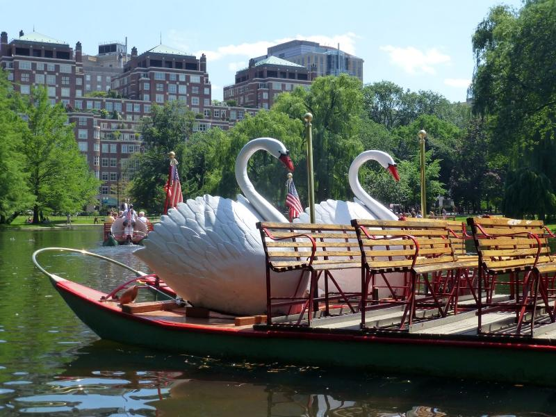 Swan boats float along the lake at the Boston Public Garden