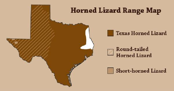 Once you're deep in the Ark-La-Tex region, you're out of horned lizard country, but the animal's range includes most of Northeast Texas.