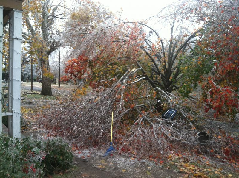 This tree in the yard of Commerce resident Jesse Van was one of many that fell victim to heavy ice accumulations.