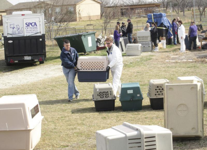 The SPCA of Texas loaded up dozens of dogs and cats which were seized Wednesday from a residence near Royse City.