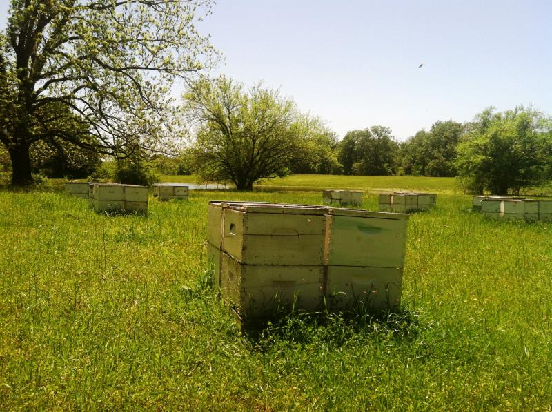 Beehives in the proposed reservoir site.