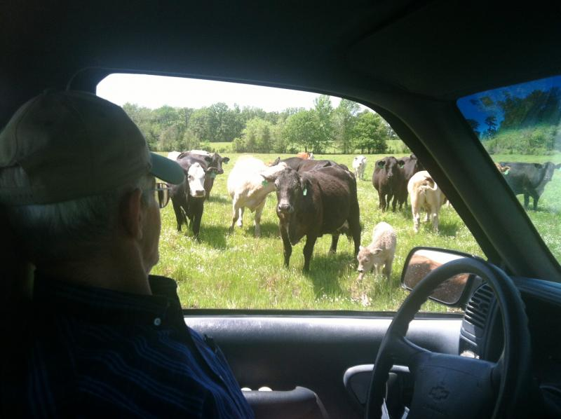 Gary Cheatwood with cattle in the proposed reservoir site.