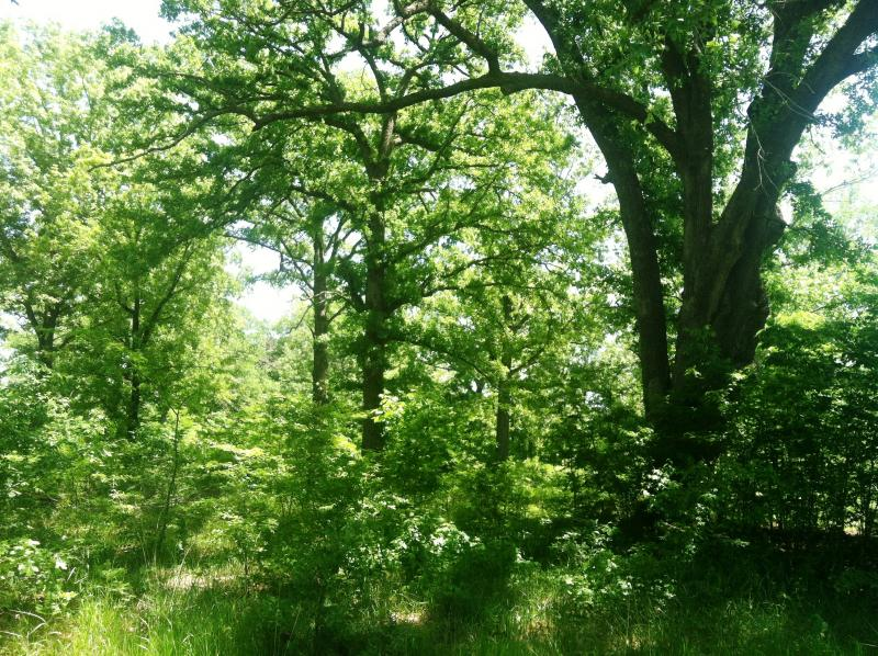 Trees in the proposed reservoir site.