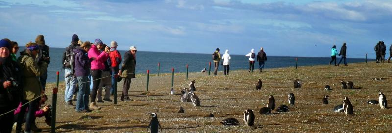 Tourists observe penguin behaviour during a visit to Magellan Island