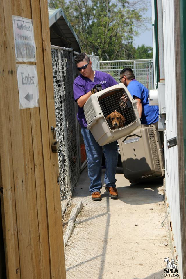 Photo taken at the Frank Barchard Memorial Animal Shelter in Wolfe City on July 23.