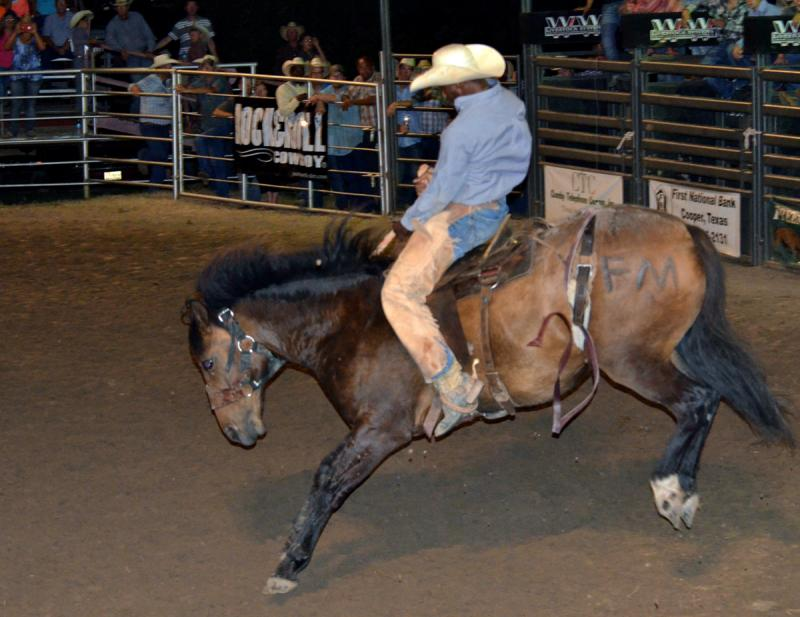 A saddle bronc rider holds on at the 2014 Cooper Rodeo.