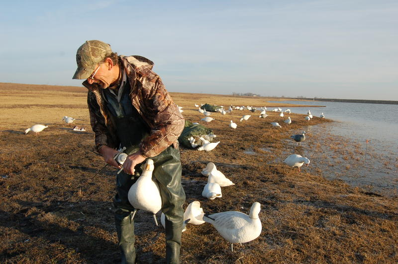 Goose guide Rick Hrncir setting up a decoy spread.