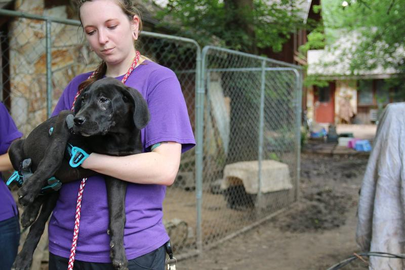 The SPCA of Texas removed over 100 cats and dogs from an unnamed facility in Hunt County on June 4.