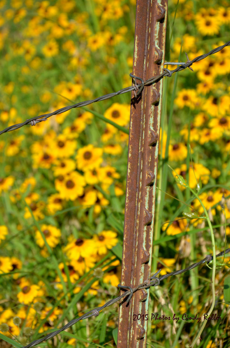 Delta County ranchers will need to keep their cattle fenced in with the county being declared Closed Range by Delta County Sheriff Ricky Smith.