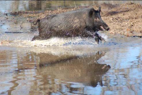 Luke speaks of post-flood fishing on Lake Fork with Seth Vanover this week, as well as sharing insights on Luke's upcoming book on hunting wild hogs.