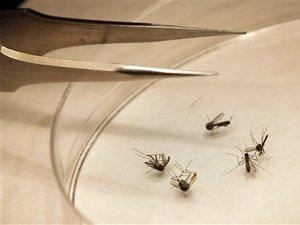 No human cases of West Nile Virus have been reported in Greenville, but mosquitoes have tested positive for the virus.