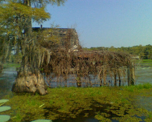 Many duck blinds on Caddo lake have been in place for over 100 years, they are as much a part of Lake Caddo as the cypress trees. Texas Parks and Wildlife has decreed that the blinds on the north side of the lake within the wildlife management area must b