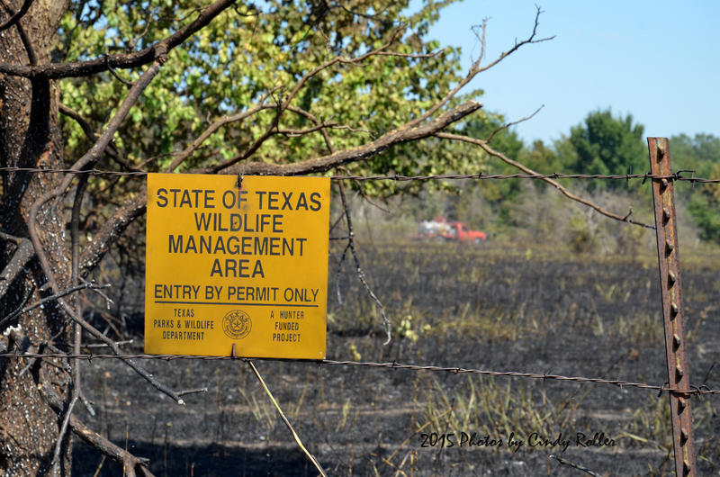 Grass fire burns 38 acres of the Cooper Wildlife Management Area Monday afternoon.