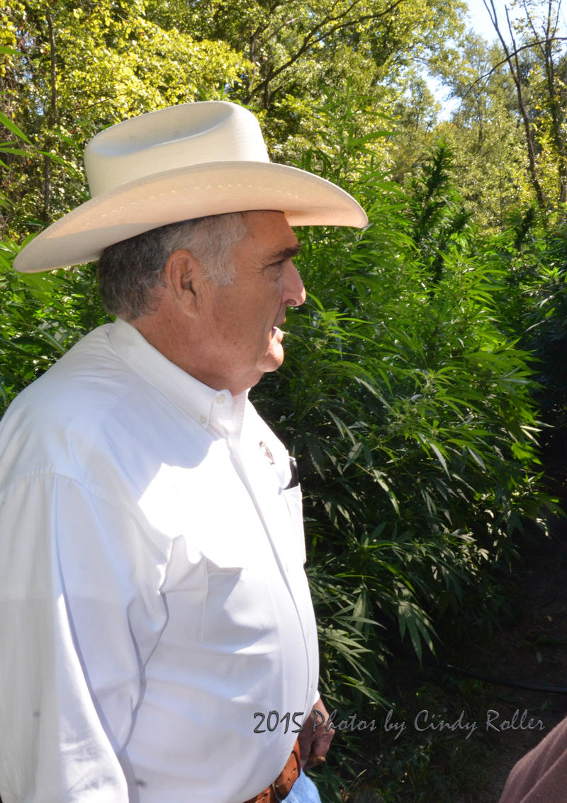Delta County Sheriff Ricky Smith leads the way to the marijuana growth.