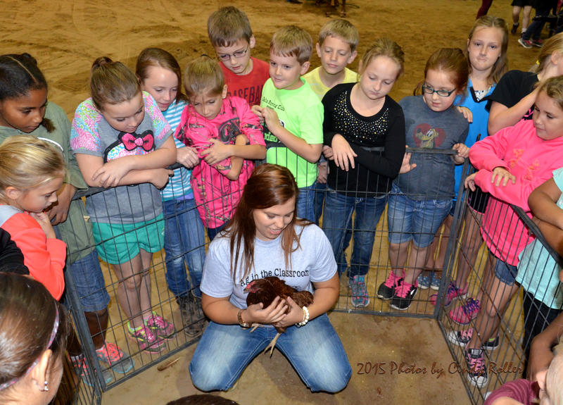 Morgan Mayers shows Cooper fourth graders how to pet a chicken at the Ag in the Classroom event..