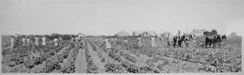 The Goss Plantation was located north of Honey Grove. The farm began with 50 acres and grew to 16,000 acres in both Fannin and Lamar County, Texas and Choctaw County, Oklahoma. A ferry linked the two sections of the farm across the Red River. Its primary