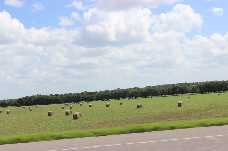 Haystacks dot the landscape in rural Fannin County, TX, on Sept. 7, 2016. Hundreds of acres of farmland will be flooded within the next few years if a state-approved plan to create a reservoir goes forward.