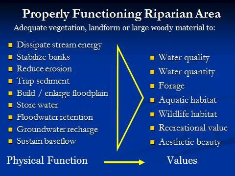 Riparian root systems create a natural buffer against erosion.