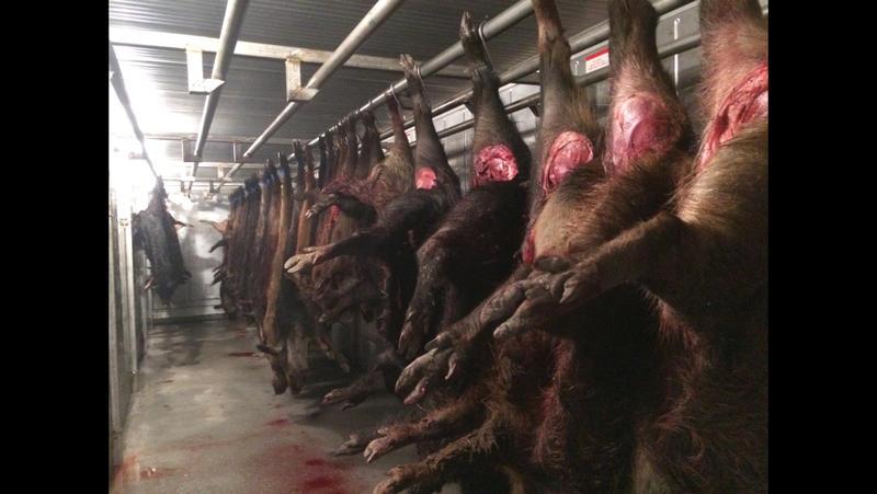 Wild hog processing