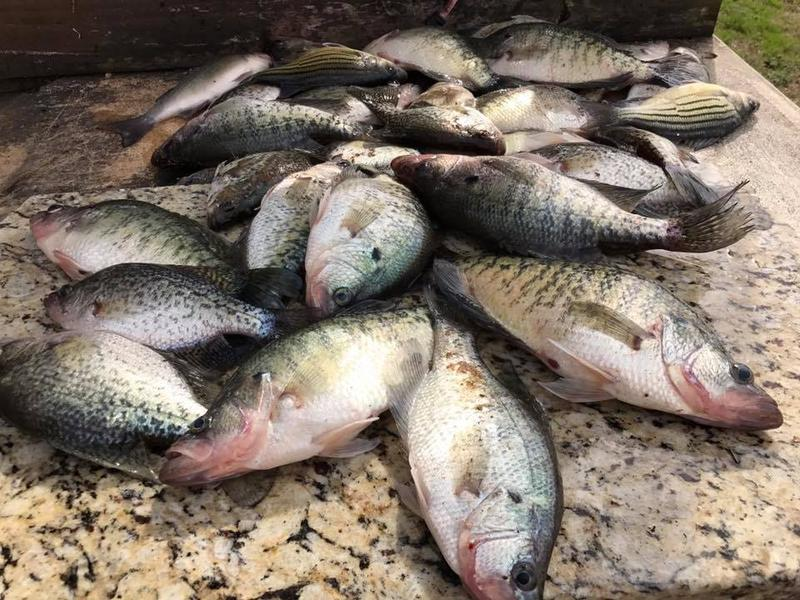 Crappie are biting at Lake Fork!