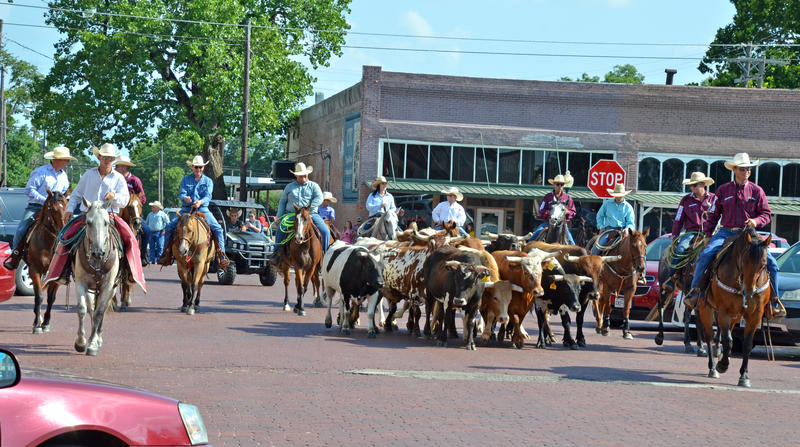Delta Roping Club started a new tradition with this cattle drive in the 69th Annual Cooper Rodeo Parade.