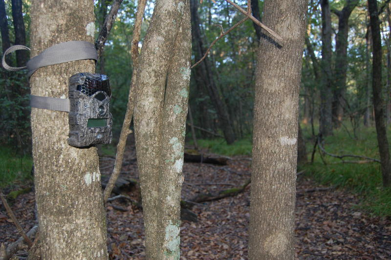 Game cameras make monitoring game movements much easier but nothing takes the place of the old time art of reading sign in the woods. Luke depends upon this Mirage Lightsout camera by Wildgame Innovations to monitor a well used deer trail.