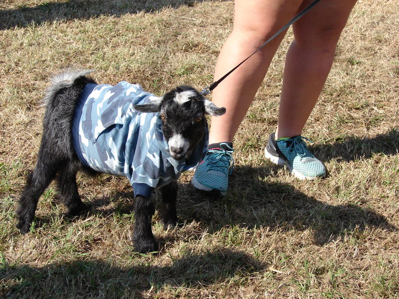 Fun critters entertained those at this year's Pecan Gap Pecan Fest.