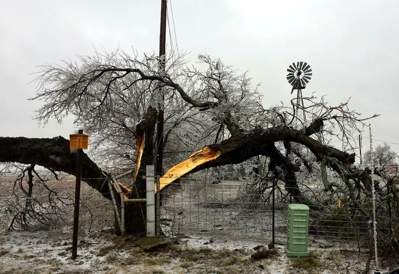 Residents in Cooke County are battling broken tree limbs and power outages.