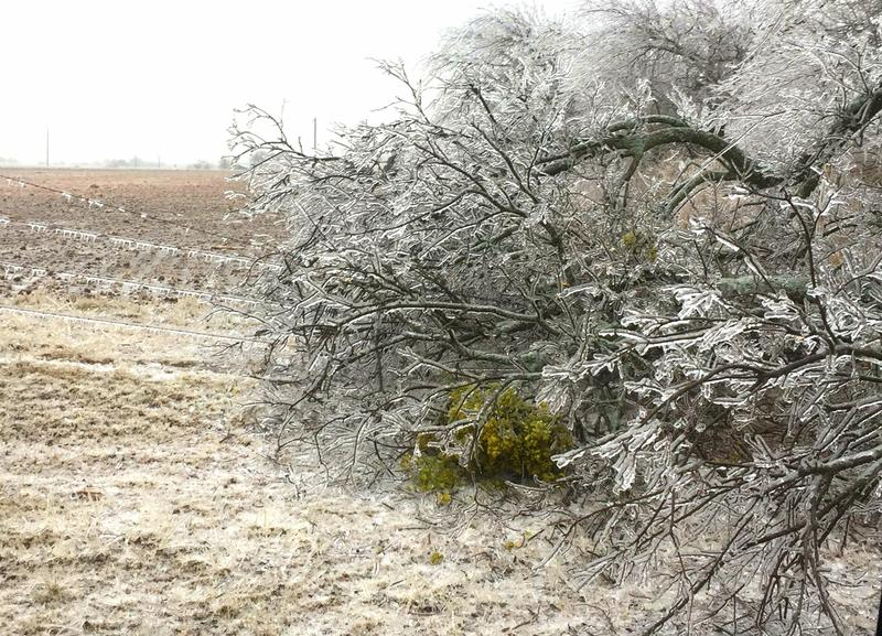 Ice storm cripples over 10,000 customers in Northcentral Texas.