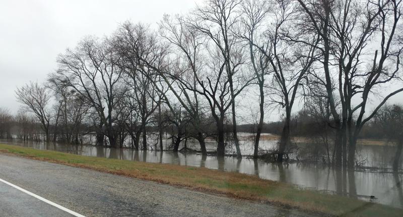 Recent rains soak pastures near State Highway 154.