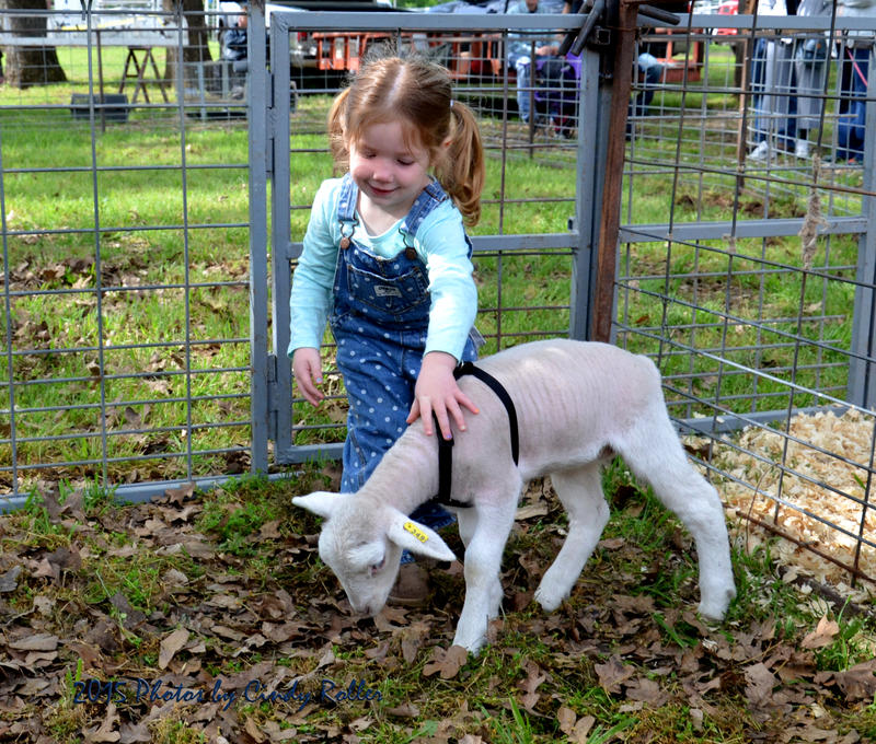 Laken Callihan and her lamb Butterbeans were featured at last year's Delta County Fair.