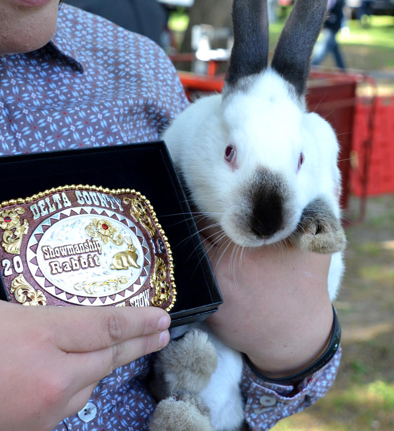 Showmanship bunnies were a highlight of the Delta County Fair.