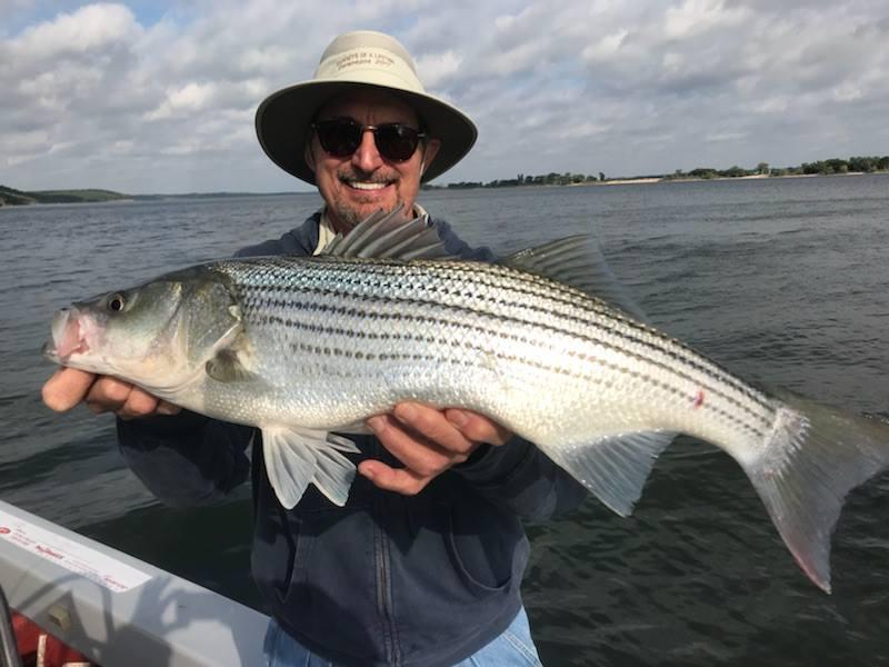 Big stripers are biting at Lake Texoma. This bruiser was landed last week.