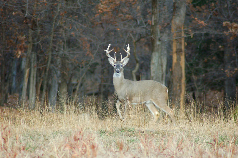 Luke discusses the possibility of expanding crossbow hunting