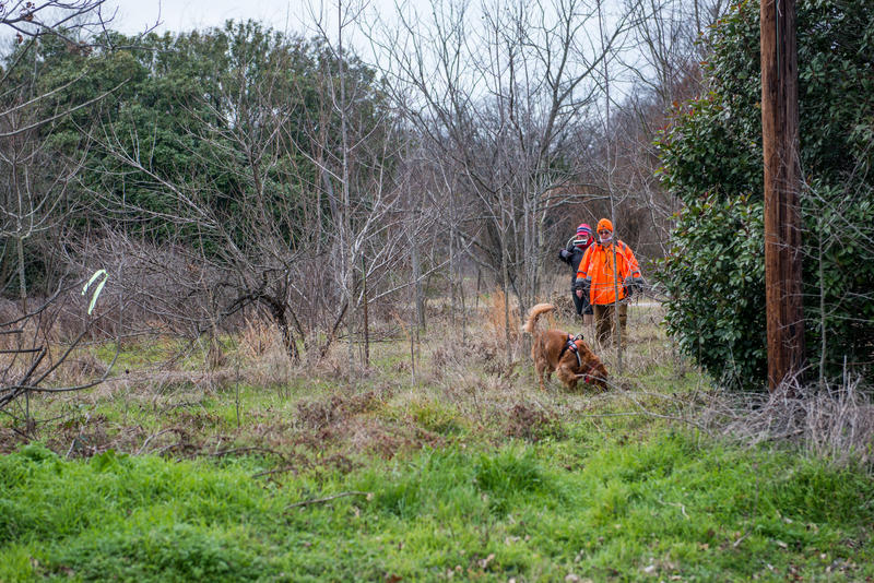 A dog trained to detect human remains in the Waco Bay Estate development near Quinlan, TX.