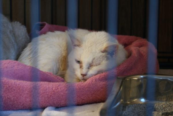 One of the cats seized last week