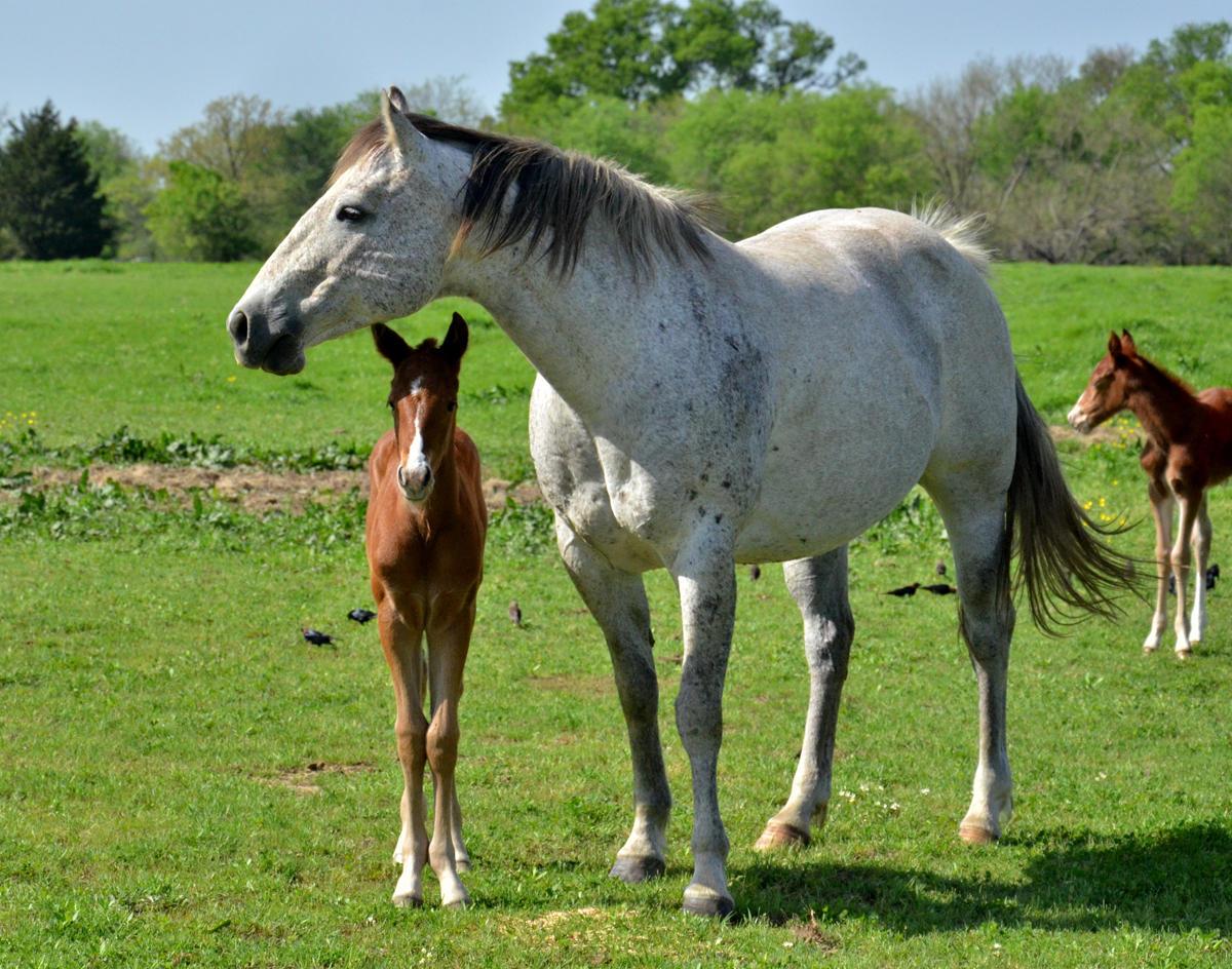 Oldest Living Horse
