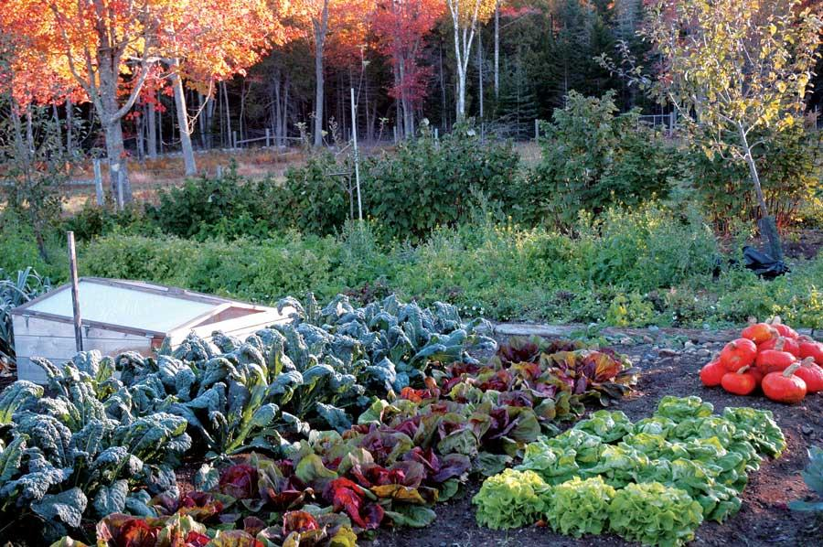 Fall gardening time is here | 88.9 KETR