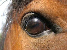Close up of the eye of a horse.