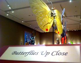 Giant Butterflies at the Sam Noble Oklahoma Museum of Natural History