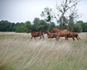 Oklahoma lawmakers could allow horse slaughter to return to the state.