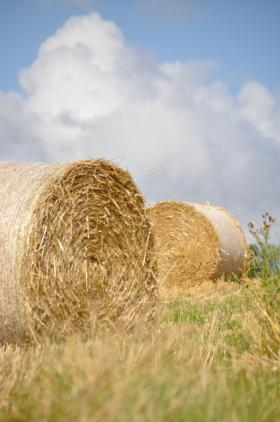 hay bales in a field with a blue sky with some clouds