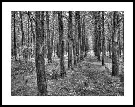 Forest near Meeks, Okla.