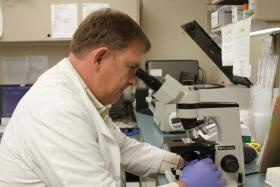 Bruce Mayhan, lab manager at Pauls Valley General Hospital, looks at a blood sample through a microscope in the hospital's lab.