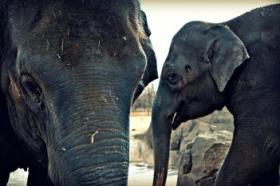Asha and her sister Chandra at the Oklahoma City Zoo.