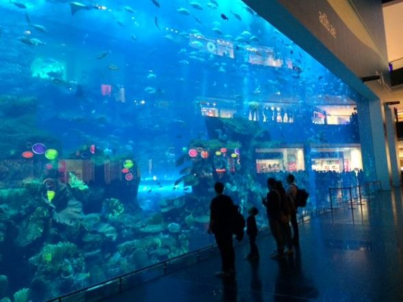 The aquarium inside Dubai Mall.
