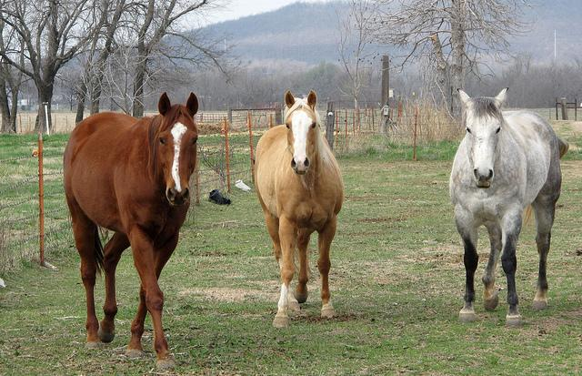 Three Horses Near Turley, Oklahoma