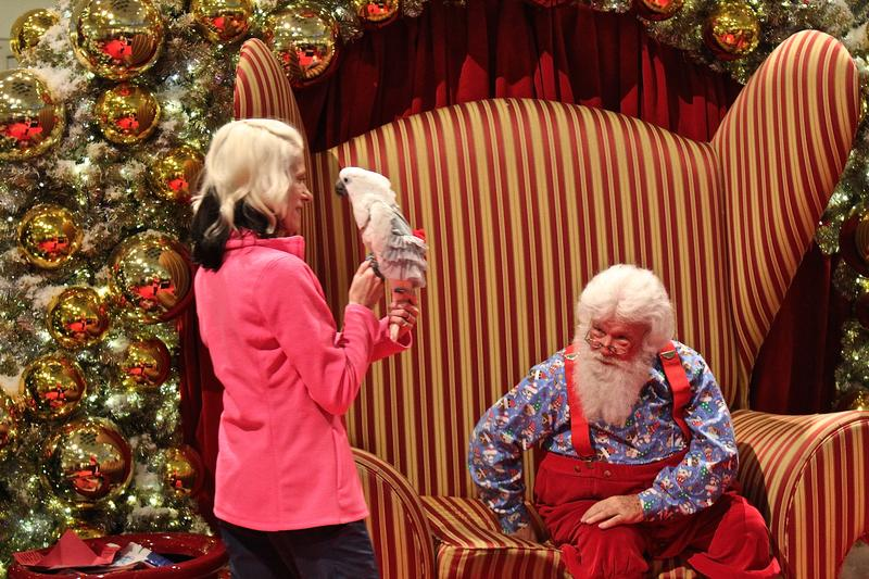 Santa prepares to hold a bird for St. Nick's Pet Pics at Quail Springs Mall