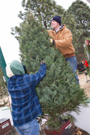 Joseph Hollowell and Drew Polk hold a Christmas tree in the tree shaker at Sorghum Mill Tree Farm in Edmond.
