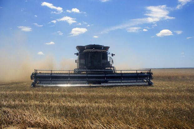 A combine crew from South Dakota harvests wheat near Altus in southwest Oklahoma.